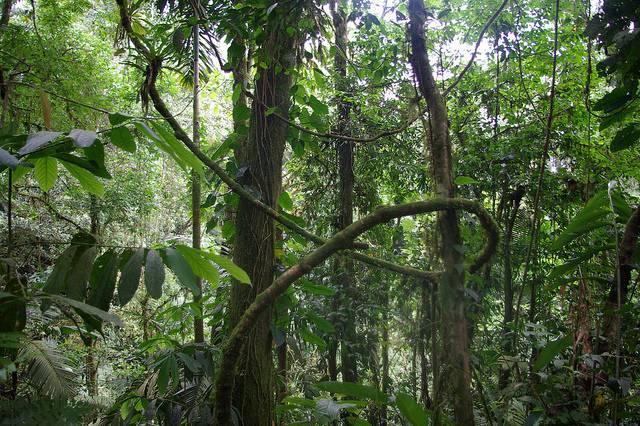 Растительность экваториального пояса