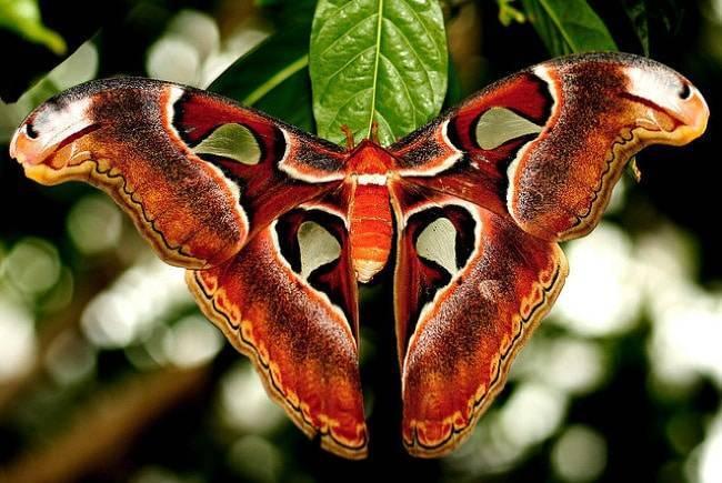 Самое большое насекомое на земле