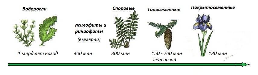 Картинки царство растений