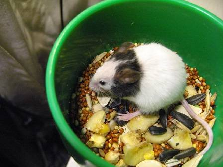 Питание мышей в природе