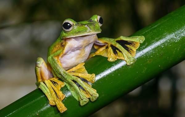 Фотки лягушек