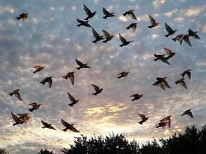 В какие страны улетают перелетные птицы