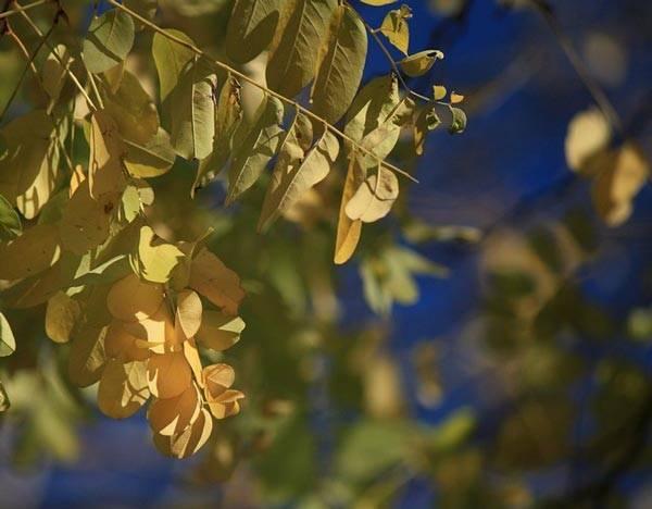 Сочинение на тему листопад