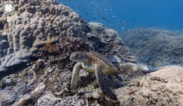 Жизнь морских обитателей