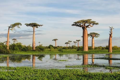 Самый большой остров африки 3 класс