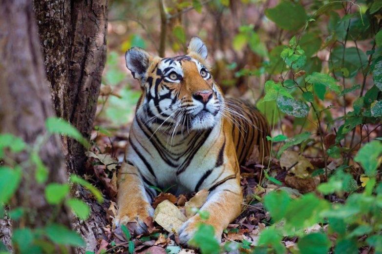 Тварини джунглів