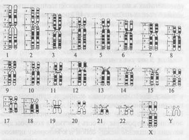 Телоцентрические хромосомы