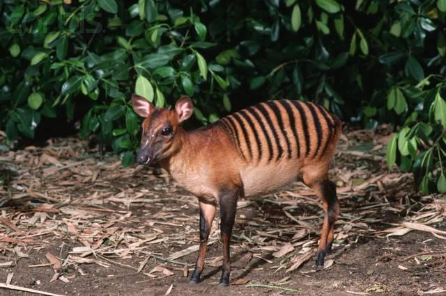 Антилопа фото животное
