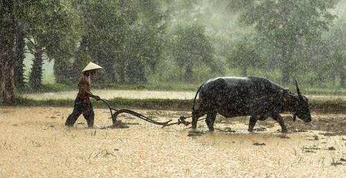 Природные условия и ресурсы южной азии
