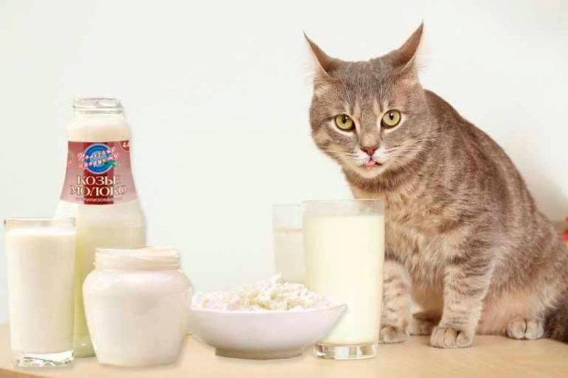 Можно ли кастрированному коту давать молоко