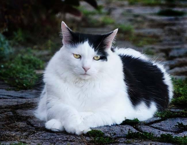 Сочинение на тему мой домашний питомец кот
