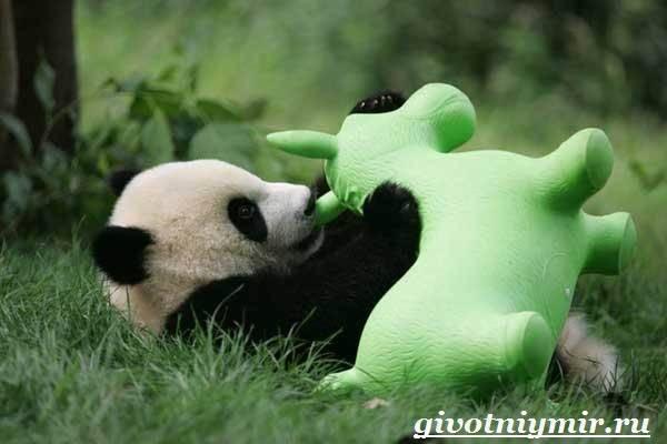 Характер панды