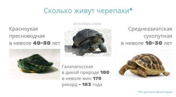 Сколько лет живут морские черепахи
