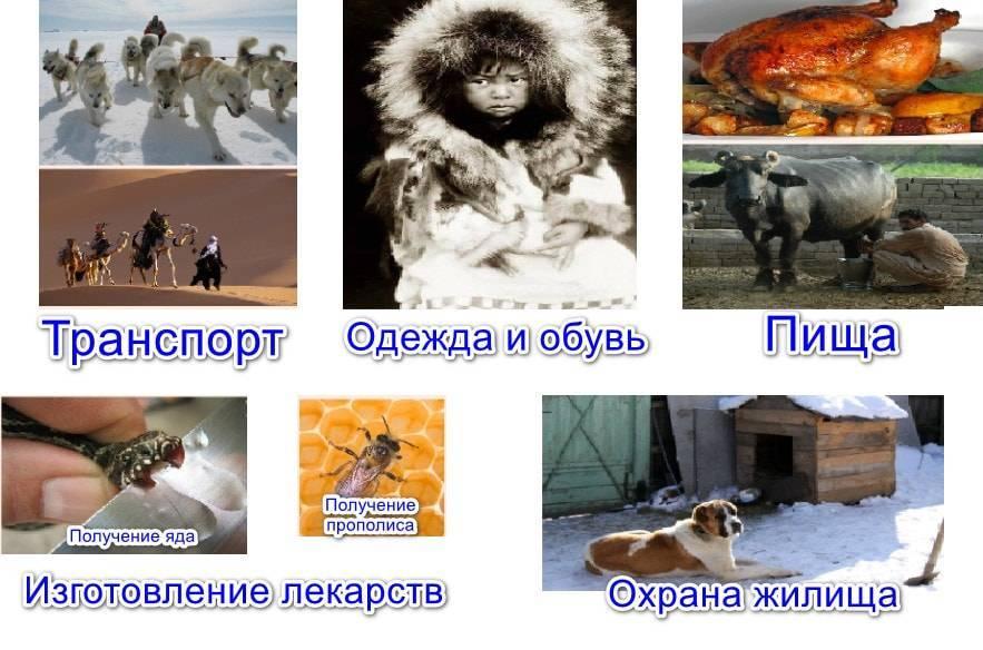 Для чего нужны животные в природе