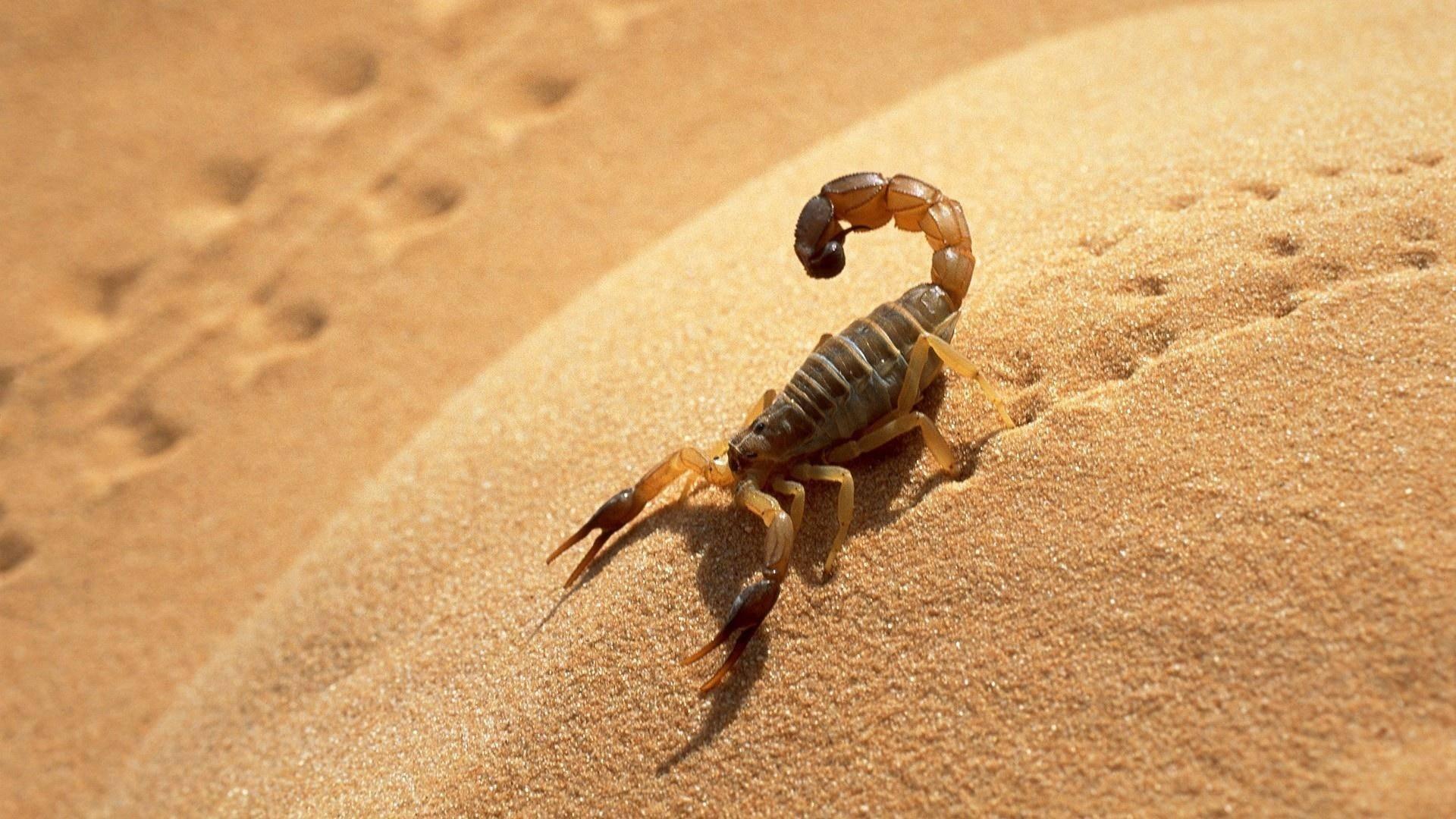 Как растения пустыни приспособились к отсутствию осадков