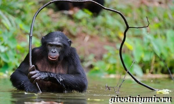Как размножаются обезьянки
