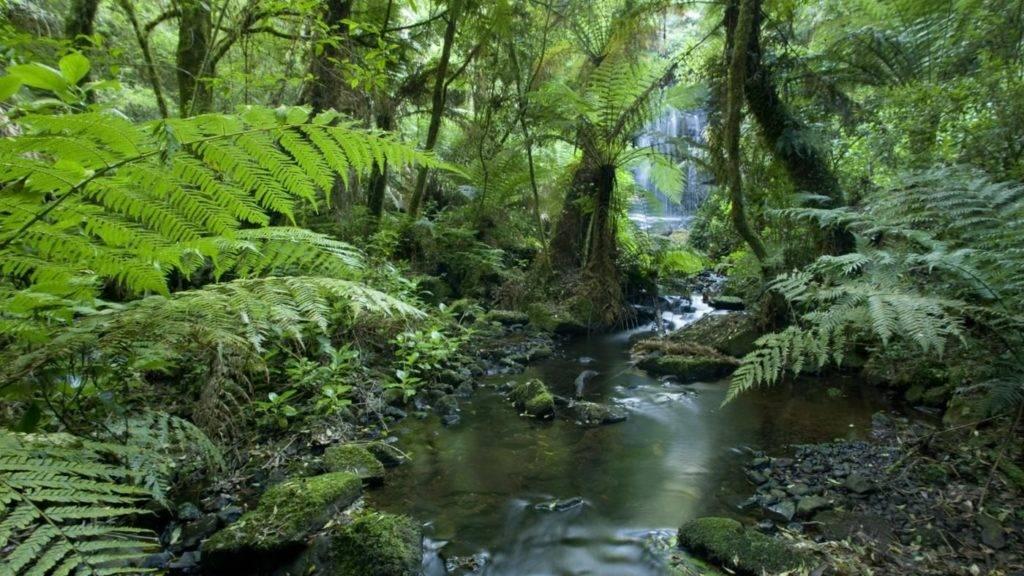 Растительность переменно влажных лесов