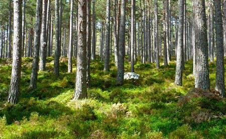 Сочинение рассуждение на тему экология