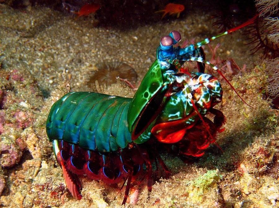 Животный мир океанских глубин