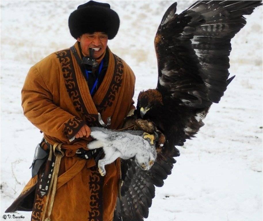 Размах крыльев орла самого большого