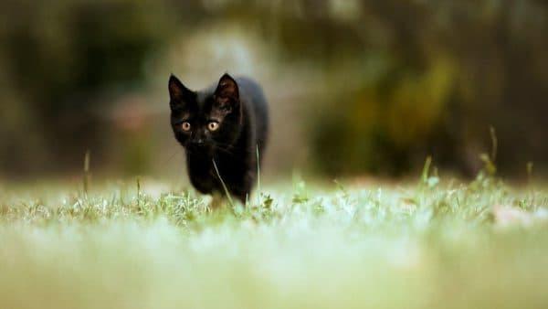Имя для кошки девочки черного цвета