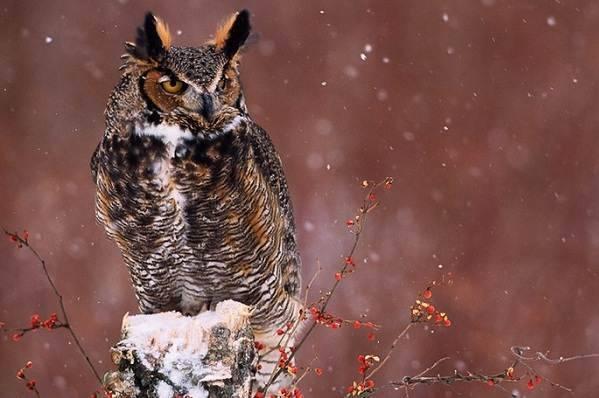 Птицы которые зимуют в россии
