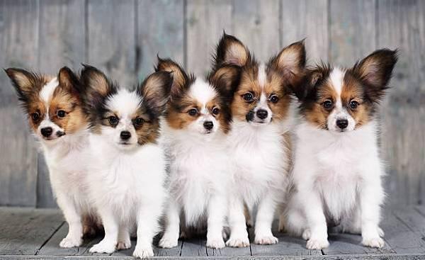 Самая добрая порода собак для детей