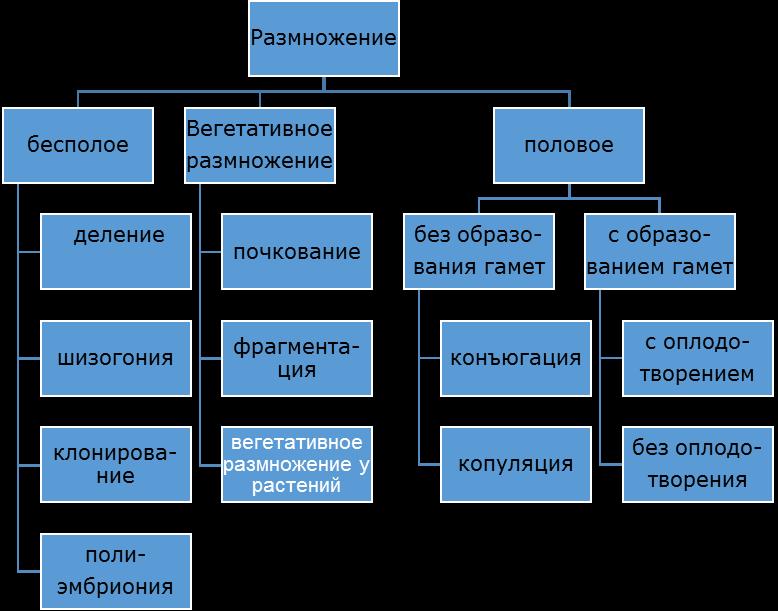 Генетический материал прокариот и эукариот