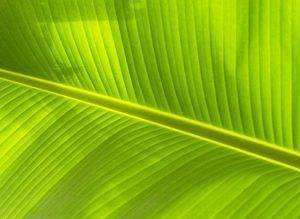 Выберите особенности строения и функций хлоропластов