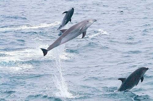 Водные животные список