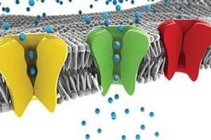 Клеточная мембрана состоит из двойного слоя