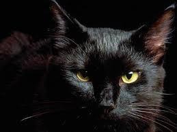 Как назвать черную кошечку