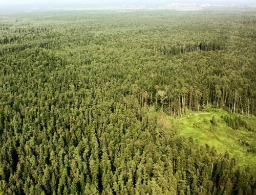 Мировые лесные ресурсы