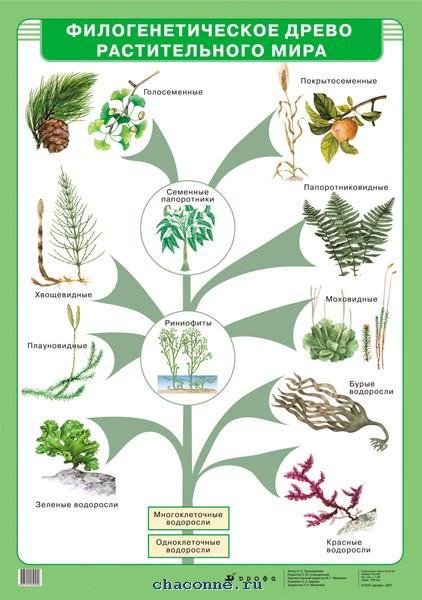 Эволюция растений от водорослей до покрытосеменных