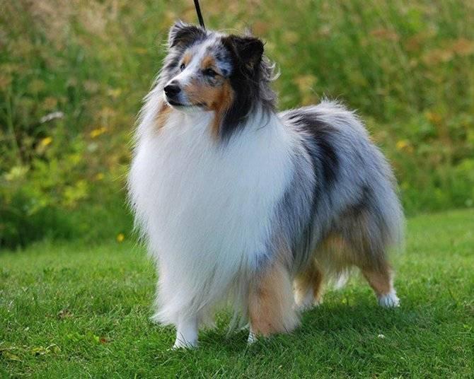 Какие собаки самые преданные