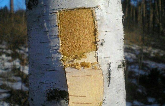 Питание деревьев