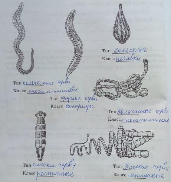 Способ питания кольчатых червей