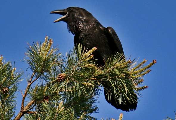Сколько лет живут птицы таблица