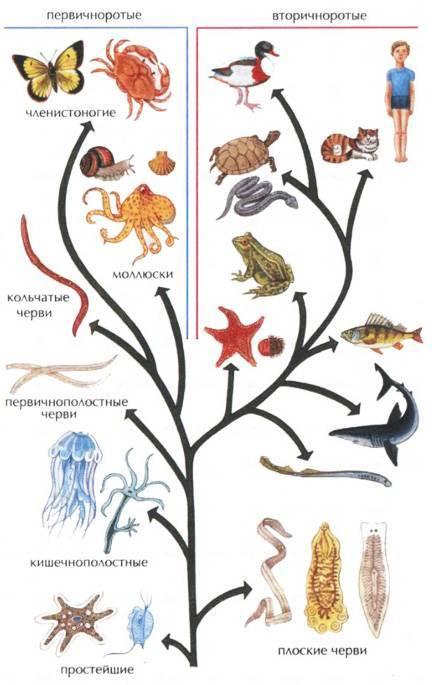 Эволюция членистоногих