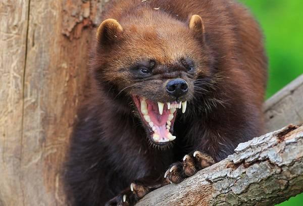 Характерный тип животного мира тайги