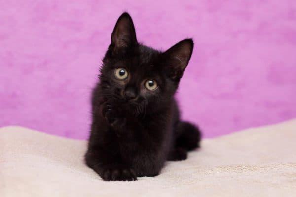 Кличка для чёрного кота мальчика