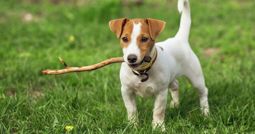 Топ самых добрых собак в мире