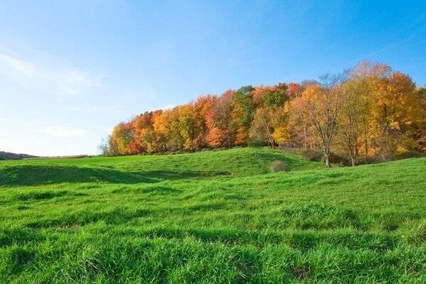 Перспективы использования земельных ресурсов