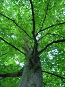 Деревья подмосковья фото и названия