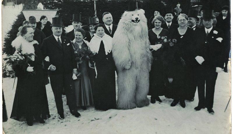 Белый медведь в крови