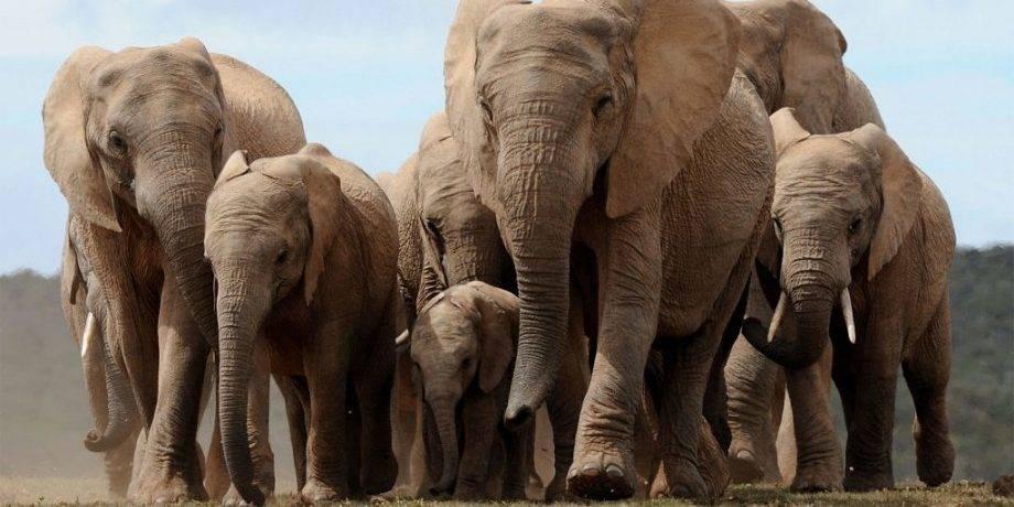 Слон информация для детей