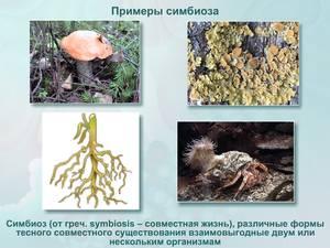 Симбиоз примеры животных