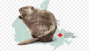 Какой зверь является официальным символом канады