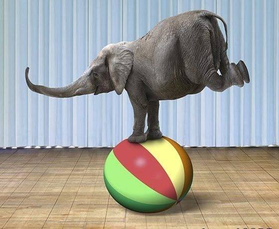 Слон размеры и вес