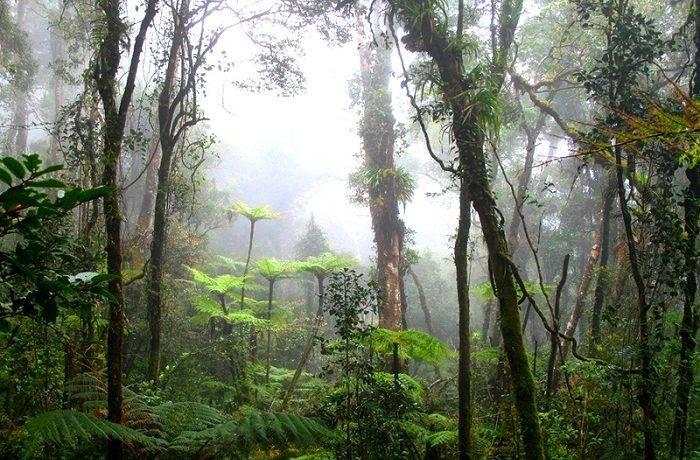 Особенности влажных экваториальных лесов